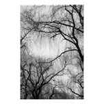 Weeping Willow Trees Black and White Silhouette Poster