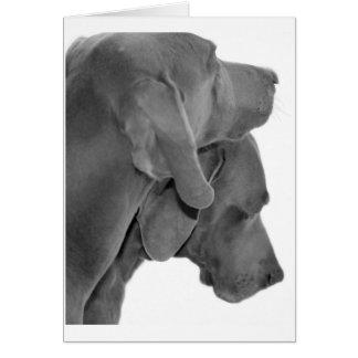 Weim Portrait - Black & White Note Card