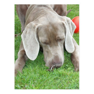 weim w butterfly.png postcard