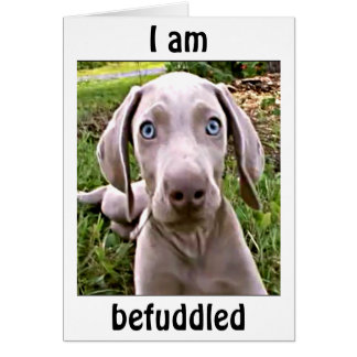 "WEIMARANAR IS BEFUDDLED YOU ARE ""40""/FABULOUS CARD"