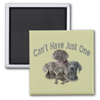 Weimaraner Can't Have Just One Square Magnet