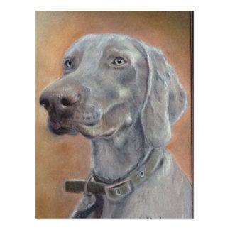 Weimaraner dog postcard