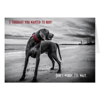 Weimaraner funny birthday card