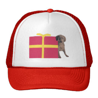 Weimaraner Gift Box Trucker Hats