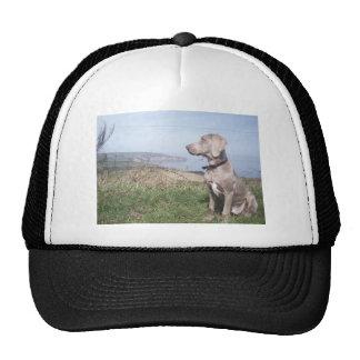 Weimaraner Trucker Hat