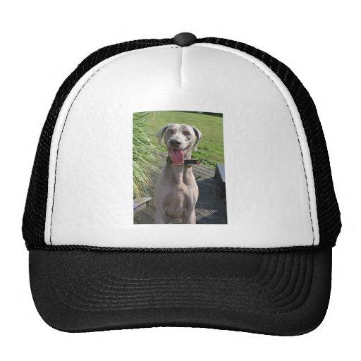 Weimaraner Trucker Hats