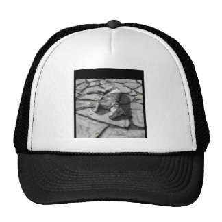 Weimaraner Hats