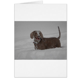 Weimaraner in deep snow card