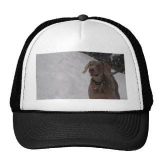 Weimaraner in the snow cap