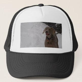 Weimaraner in the snow trucker hat