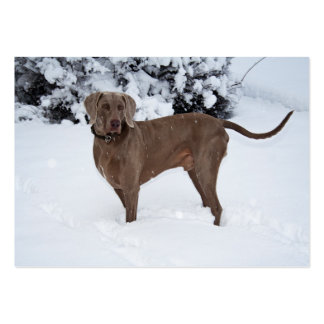 Weimaraner In Winter Pack Of Chubby Business Cards