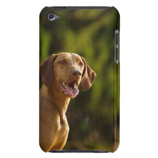 Weimaraner iPod Touch Covers