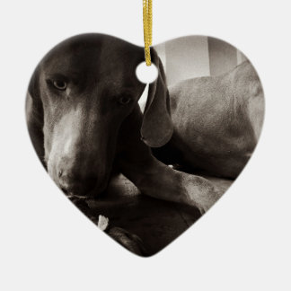 Weimaraner looking at food christmas ornament