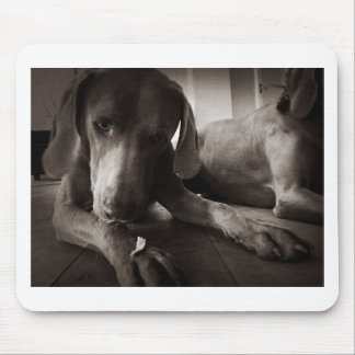 Weimaraner looking at food mouse mat
