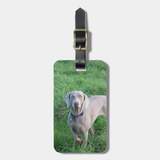 Weimaraner Lovers Luggage Tag