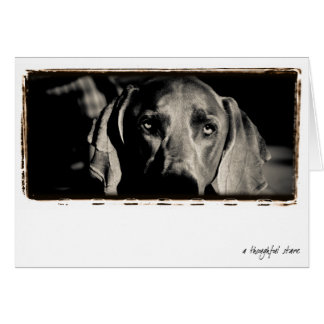 "Weimaraner Nation : ""A Thoughtful Stare"" Card"