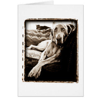 "Weimaraner Nation : ""Ballou's Chair"" Card"