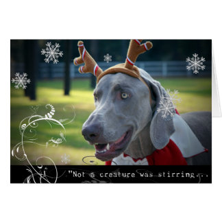 "Weimaraner Nation :""Not A Creature was Stirring.."" Card"