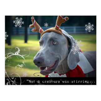 "Weimaraner Nation :""Not a creature was stirring... Postcard"