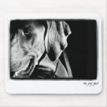 Weimaraner Nation : The Grey Ghost Mouse Pad