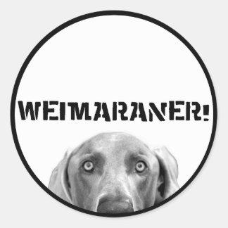 Weimaraner Nation : Weimaraner In a Box (Circle) Round Sticker