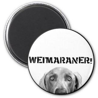 Weimaraner Nation Weimaraner In A Box Magnets