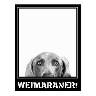 Weimaraner Nation : Weimaraner In A Box! Postcard