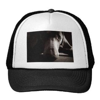 Weimaraner portrait mesh hats