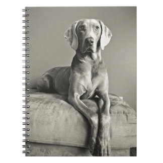 Weimaraner Portrait Spiral Notebook