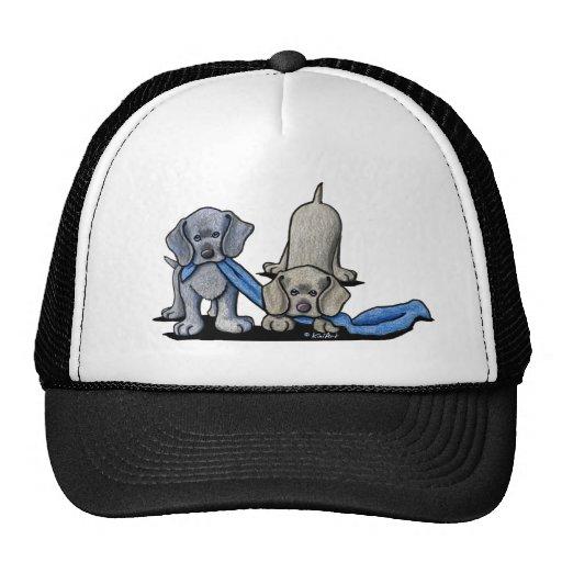 Weimaraner Puppies Hat