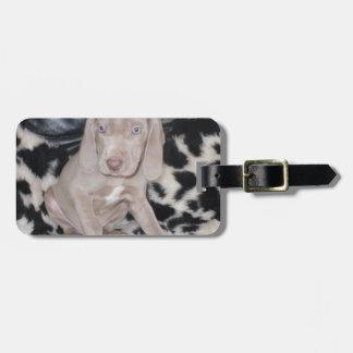 Weimaraner Puppy Bag Tag
