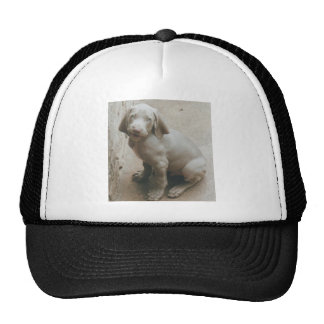 weimaraner puppy cute mesh hat