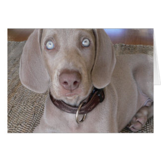 Weimaraner Puppy Greeting Card