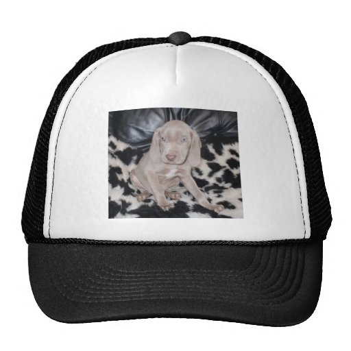 Weimaraner Puppy Mesh Hat