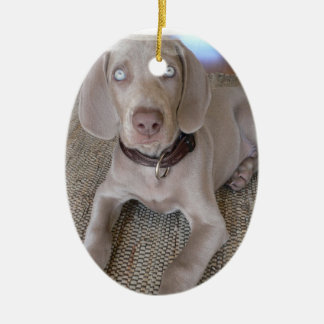 Weimaraner Puppy Ornament