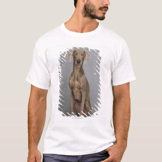 Weimaraner sitting, studio shot T-Shirt