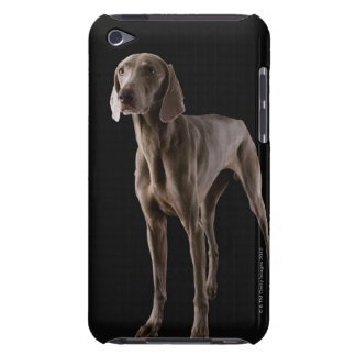 Weimaraner, studio shot barely there iPod cases