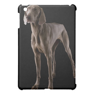 Weimaraner, studio shot iPad mini cover
