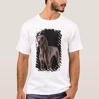 Weimaraner, studio shot T-Shirt