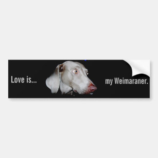 Weimaraner - The Gray Ghost Bumper Sticker