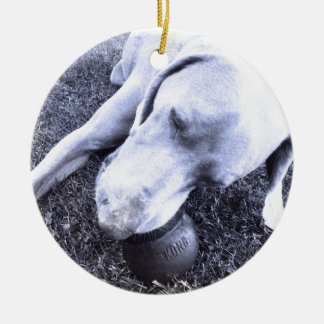 Weimaraner with kong christmas ornament