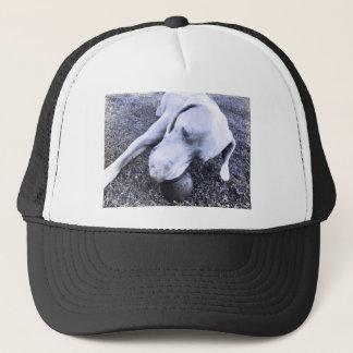 Weimaraner with kong trucker hat