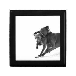 Weimaraner's in the snow small square gift box