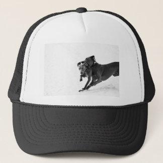 Weimaraner's in the snow trucker hat