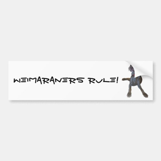 Weimaraners Rule! Bumper Sticker