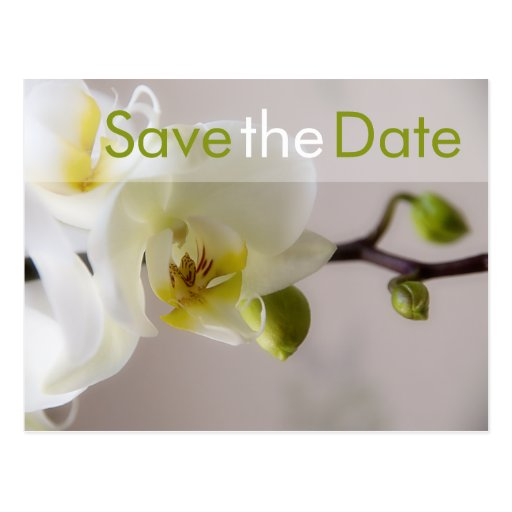 Weisse Orchidee • Save the Date Postkarte Post Cards