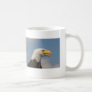 Weißkopfseeadler Porträt Nahaufnahme Kaffeetassen