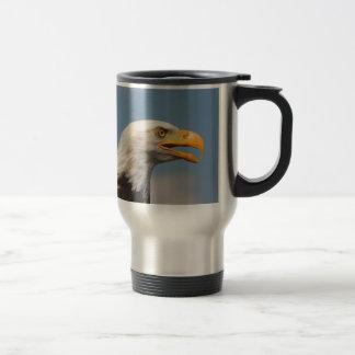 Weißkopfseeadler Porträt Nahaufnahme Tee Haferl