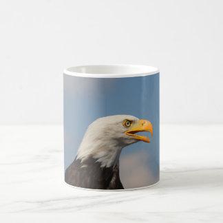 Weißkopfseeadler Porträt Nahaufnahme Tee Tassen