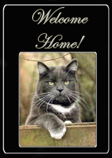 Welcome back cards zazzle uk welcome home cat greeting card m4hsunfo